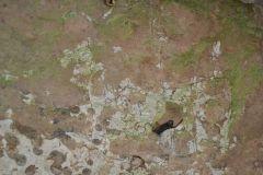 Grotta-del-Cavallo-37